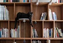 Компактная идея комплекса для кошек