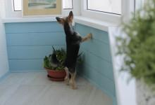 Балкон, тыква и собака