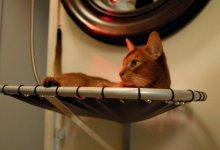 Вписывая кошку в интерьер