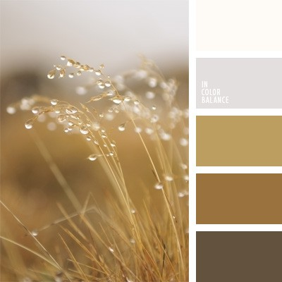 Фото палитра коричневых цветах